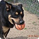 Adopt A Pet :: Zander