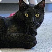 Adopt A Pet :: Carter Cash - Victor, NY