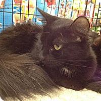 Adopt A Pet :: Cola - East Hanover, NJ