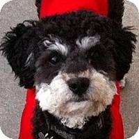 Adopt A Pet :: Dewey - La Costa, CA