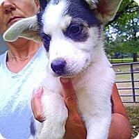 Adopt A Pet :: Gidget - Louisville, KY
