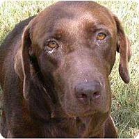 Adopt A Pet :: Tanner - Altmonte Springs, FL