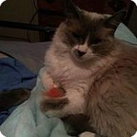 Adopt A Pet :: Renesseme - Ennis, TX