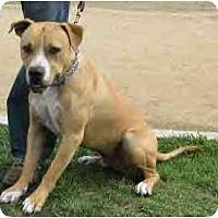 Adopt A Pet :: Tanner - Lodi, CA