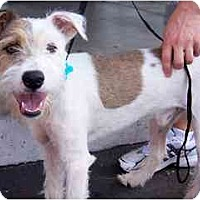 Adopt A Pet :: Oakley - Scottsdale, AZ