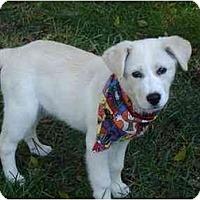 Adopt A Pet :: Aspen Y - Cumming, GA