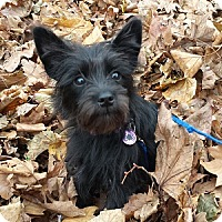 Adopt A Pet :: Savy - Hamilton, ON