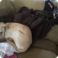 Adopt A Pet :: Austin 1 - Las Vegas, NV
