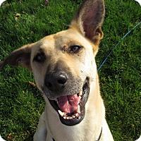 Adopt A Pet :: Tala - Meridian, ID