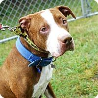 Adopt A Pet :: Harrison-Adopted! - Detroit, MI