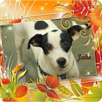 Adopt A Pet :: Jake - Crowley, LA