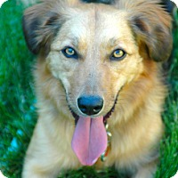 Adopt A Pet :: Ruby - Denver, CO