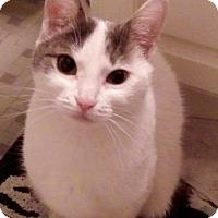 Adopt A Pet :: Heidi - Philadelphia, PA