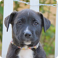 Adopt A Pet :: Eli von Betty - Thousand Oaks, CA