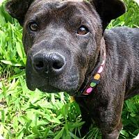 Adopt A Pet :: Princess Leia - Fennville, MI