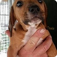 Adopt A Pet :: Nightcrawler - Gainesville, FL