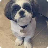Adopt A Pet :: Shadow - LEXINGTON, KY