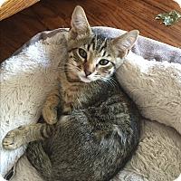 Adopt A Pet :: Linus - Kelso/Longview, WA