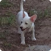 Adopt A Pet :: Logan - Forest Ranch, CA
