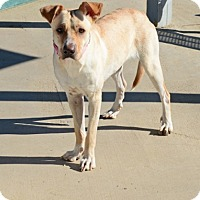 Adopt A Pet :: Minnie - Gardnerville, NV