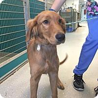 Adopt A Pet :: Burt - Cumming, GA