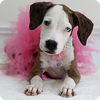 Adopt A Pet :: Chelsea - Picayune, MS