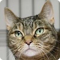 Adopt A Pet :: Star - Medford, MA