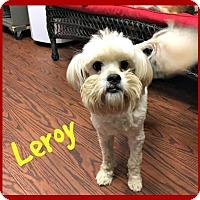 Adopt A Pet :: Leroy - Spartanburg, SC
