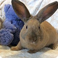 Adopt A Pet :: Schroedoer - Idaho Falls, ID