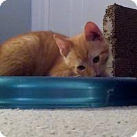 Adopt A Pet :: Fry - Chelsea - Kalamazoo, MI
