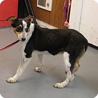 Adopt A Pet :: Joanie - Aurora, IL