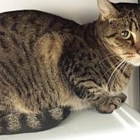 Adopt A Pet :: Rosella - Oakland Park, FL