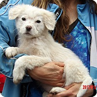 Adopt A Pet :: Uma (9 lb) Video! - Sussex, NJ