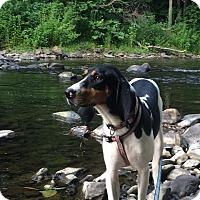 Adopt A Pet :: Aspen - Bardonia, NY