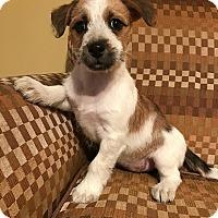 Adopt A Pet :: Esmeralda - New Oxford, PA