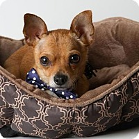Adopt A Pet :: *MORTY - Sacramento, CA