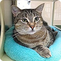 Adopt A Pet :: Amelia - Foothill Ranch, CA