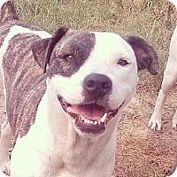 Adopt A Pet :: Petey - Somerville, TX