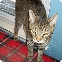 Adopt A Pet :: COOPER - Philadelphia, PA