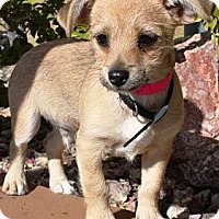 Adopt A Pet :: Jimmy - Gilbert, AZ