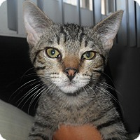 Adopt A Pet :: Bright Eyes - Redondo Beach, CA