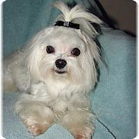 Adopt A Pet :: Timmy - Palm City, FL