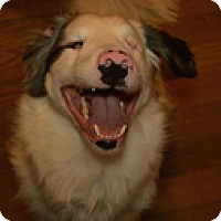 Adopt A Pet :: Sammie - Philadelphia, PA