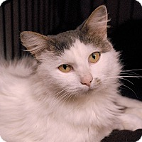 Adopt A Pet :: Delilah - Winchendon, MA
