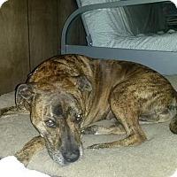 Adopt A Pet :: Lea - Rexford, NY