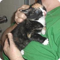 Adopt A Pet :: Wilma - Pensacola, FL
