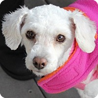 Adopt A Pet :: Bailey - La Costa, CA