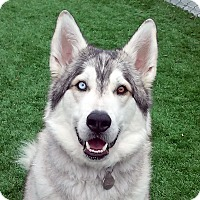 Adopt A Pet :: BOULDER - Adoption Pending - Boise, ID