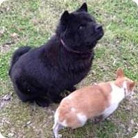 Adopt A Pet :: EBONY - Quinlan, TX
