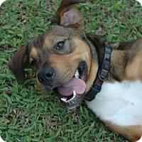 Adopt A Pet :: Elsie - Weeki Wachee, FL